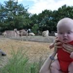 Ja - Staszek wśród wielbłądów