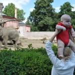 Z góry widać lepiej - Mama, ja i słonie