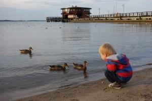 Dokarmianie kaczek w Pucku